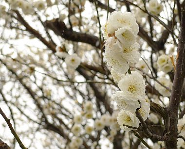 2011_02_12(土)No[247]