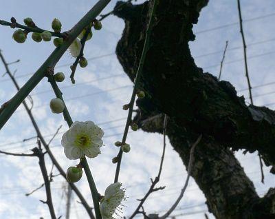 2011_02_26(土)No(394)