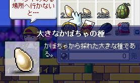 Maple81125-1.jpg
