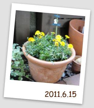 002_picnik_20110614170943.jpg