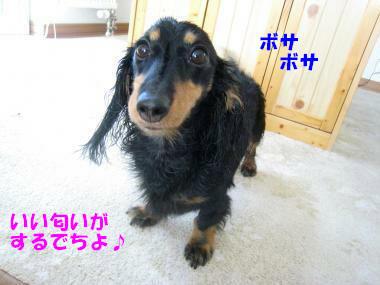 IMG_9657-3.jpg