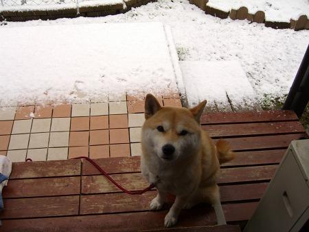 雪が積もった~
