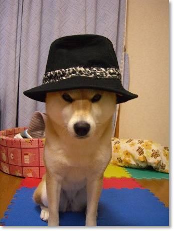 帽子似合う?