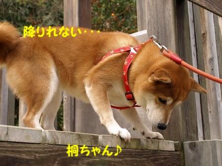 桐ちゃんも登ったけど・・・