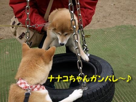 野次犬さくらの応援・・・!