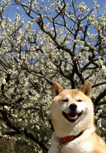 梅とさくら