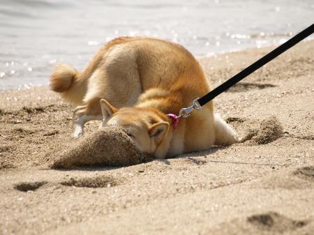 砂だらけ!!