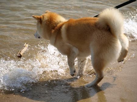 波にビビる!!