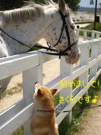 こんにちは~馬さん