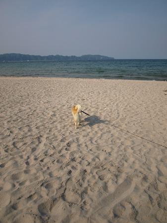 海に向かって!