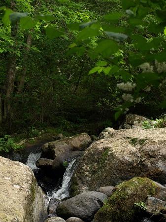 小さな渓流