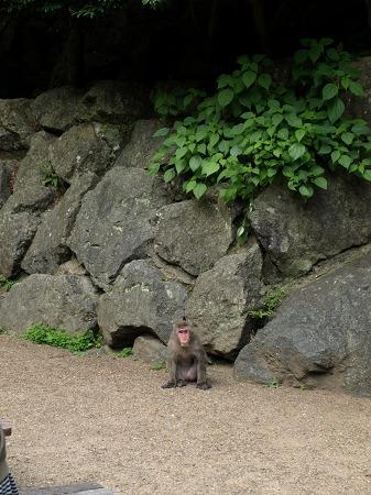 出た!箕面の猿!!