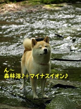 マイナスイオンたっぷり~