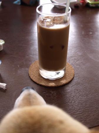コーヒーがん見
