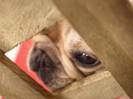 看板犬は見た!