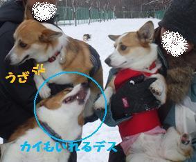 Rin081123-3.jpg