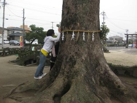 岡山神社の大木