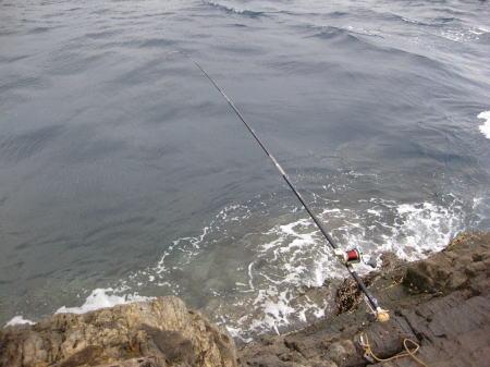 魚のネヤ1