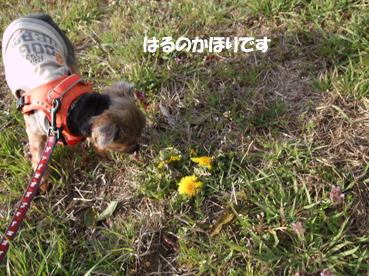 DSCF3615_20100405145135.jpg