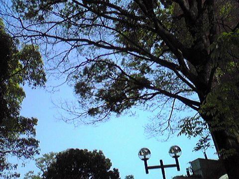 綺麗な青い空が広がってたよ^^