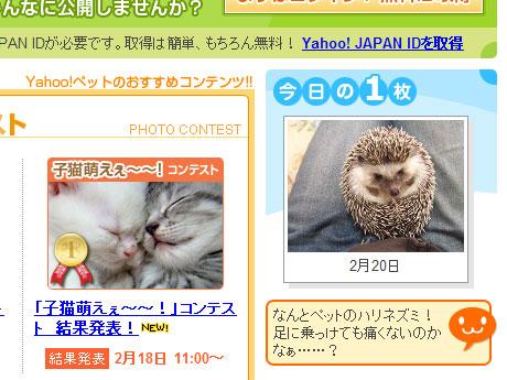 2009_0220_yahoo02.jpg