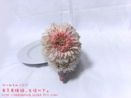 2009_0315_b2.jpg