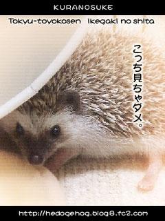 TKi_k01.jpg