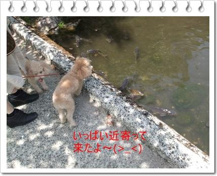 2011_0505_113350-DSCF3995 - コピー