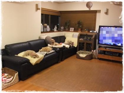 2011_0303_183038-DSCF3326_convert_20110306100136.jpg
