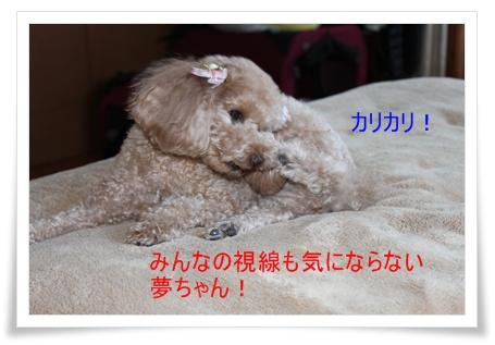2011_0413_112440-IMG_1890.jpg