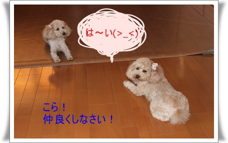 2011_0414_172313-IMG_1919.jpg