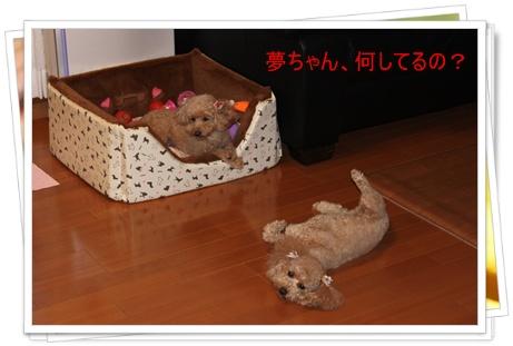 2011_0414_185113-IMG_1924.jpg