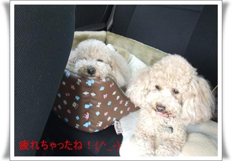 2011_0505_135641-DSCF4028.jpg