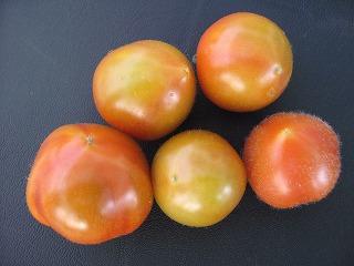 s-tomato 003