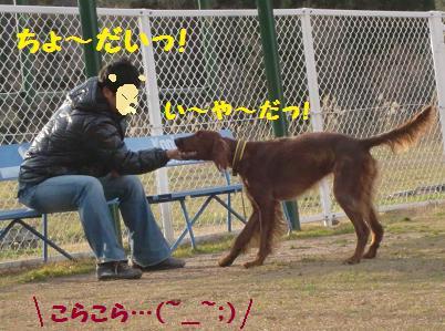 CIMG6398.jpg