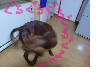 snap_henachokochokochoko_2008121222117.jpg