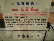 t-2.jpg