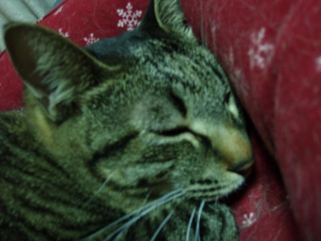 猫20081202 008-01