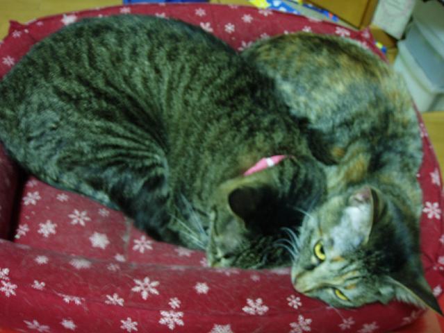猫20081207 013-1