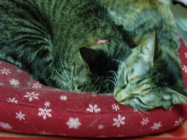 猫20081207 016-1