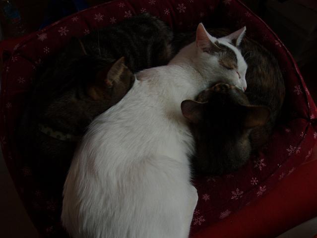 猫20081207 029-1