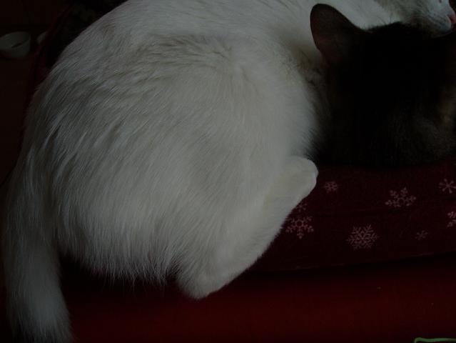 猫20081207 031-1