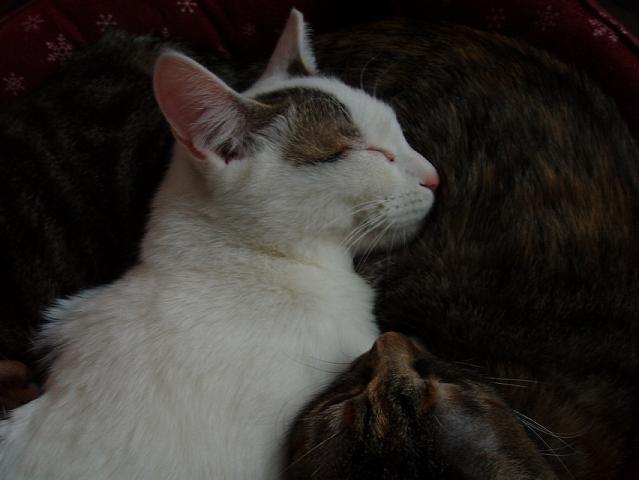 猫20081207 032-1