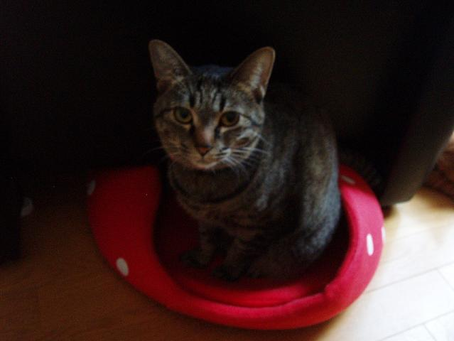 猫20081207 043-1