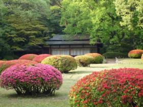 明治神宮庭園