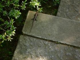 根津美術館の蜥蜴