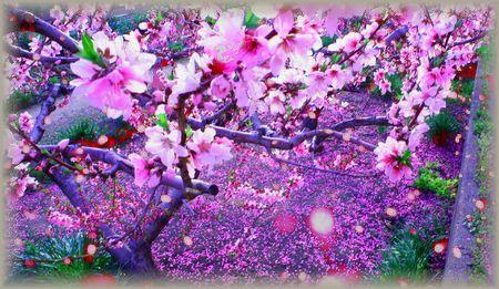 涼風の桜吹雪