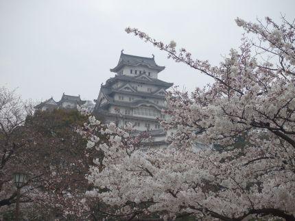 2007_0407_桜②