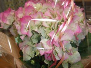 2007_0418_flower.jpg