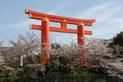 平安神宮 桜01